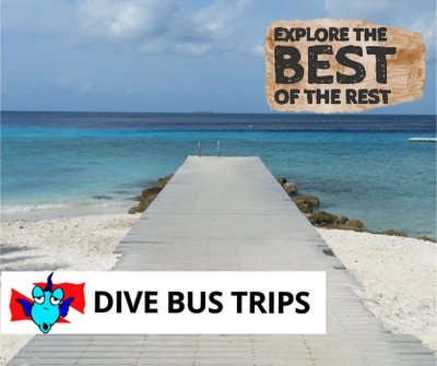 The Dive Bus Curacao The Dive Bus House Reef Pierbaai Reef And Car
