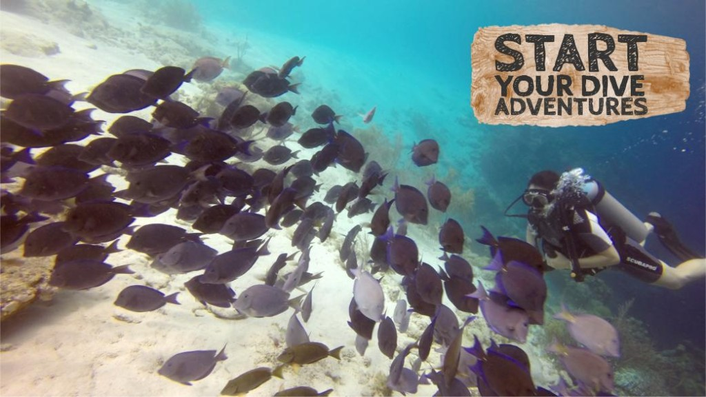 Find out how to start learning to dive ... today!